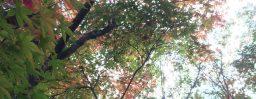 10月19日軽井沢。末候。蟋蟀在戸。