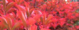 10月21日軽井沢。末候。蟋蟀在戸。
