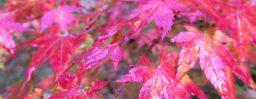 10月22日軽井沢。末候。蟋蟀在戸。