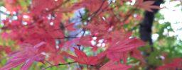 10月23日軽井沢。末候。蟋蟀在戸。