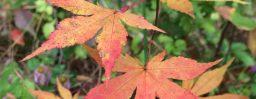 10月26日軽井沢。初候。霜始降。