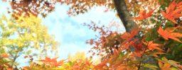 10月24日軽井沢。霜降。初候。霜始降。