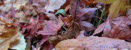 10月27日軽井沢。初候。霜始降。
