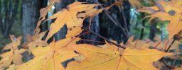 10月28日軽井沢。初候。霜始降。