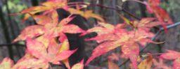 10月29日軽井沢。次候。霎時施。