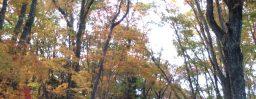 10月30日軽井沢。次候。霎時施。
