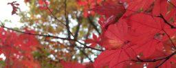 10月31日軽井沢。次候。霎時施