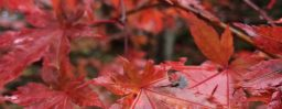 11月2日軽井沢。次候。霎時施。