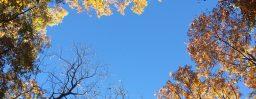 11月4日軽井沢。末候。楓蔦黄。