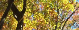 11月6日軽井沢。末候。楓蔦黄。