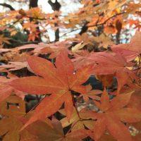 11月16日軽井沢。次候。地始凍。