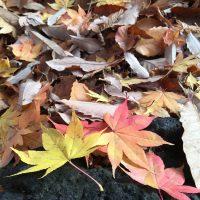 11月17日軽井沢。次候。地始凍。