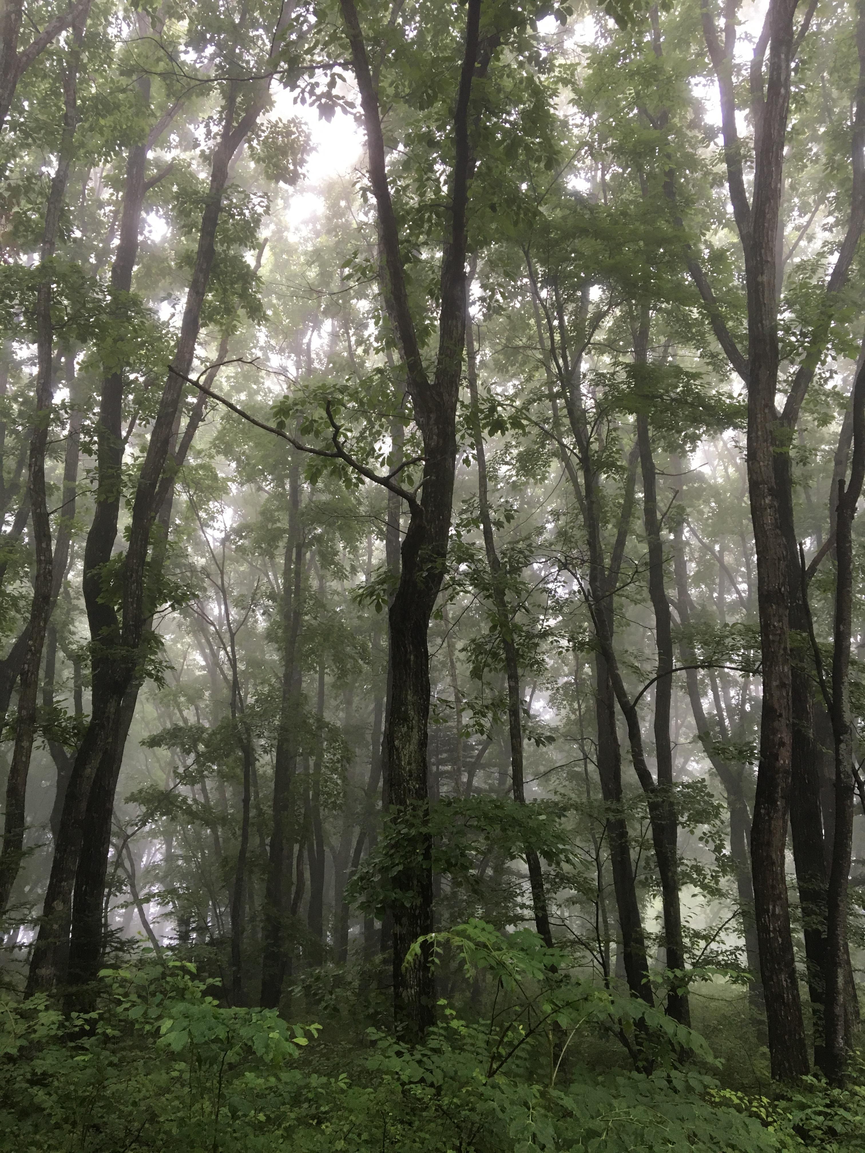 6月17日軽井沢。末候。梅子黄。