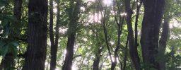 7月14日軽井沢。次候。蓮始開。