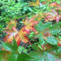 8月20日軽井沢。末候。蒙霧升降。