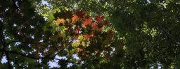 9月19日軽井沢。白露。末候。玄鳥去。