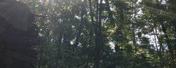 9月21日軽井沢。白露。末候。玄鳥去。