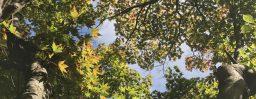 9月25日軽井沢。秋分。初候。雷乃収声。
