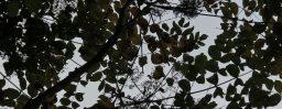 10月5日軽井沢。秋分。末候。水始涸。