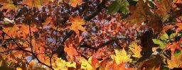 10月10日軽井沢。寒露。初候。鴻雁来。