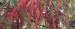 10月13日軽井沢。寒露。次候。菊花開。