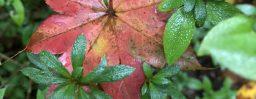 10月17日軽井沢。寒露。次候。菊花開。