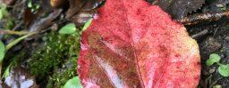 10月21日軽井沢。寒露。末候。蟋蟀在戸。