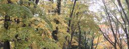 10月25日軽井沢。霜降。初候。霜始降。