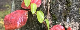 10月29日軽井沢。霜降。次候。霎時施。