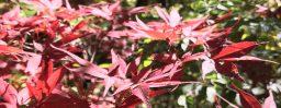 10月26日軽井沢。霜降。初候。霜始降。