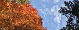10月27日軽井沢。霜降。初候。霜始降。