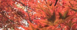 10月28日軽井沢。霜降。次候。霎時施。