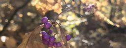 11月1日軽井沢。霜降。次候。霎時施。
