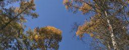 11月6日軽井沢。霜降。末候。楓蔦黄。