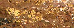 11月5日軽井沢。霜降。末候。楓蔦黄。