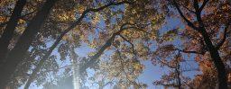 11月7日軽井沢。立冬。初候。山茶始開。