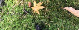 11月11日軽井沢。立冬。初候。山茶始開。