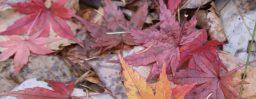 11月15日軽井沢。立冬。次候。地始凍。