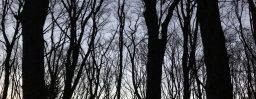 11月27日軽井沢。小雪。次候。朔風払葉。
