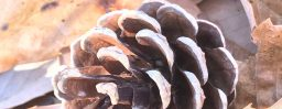 11月28日軽井沢。小雪。次候。朔風払葉。