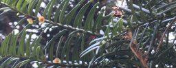 11月29日軽井沢。小雪。次候。朔風払葉。