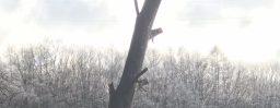 12月2日軽井沢。小雪。末候。橘始黄。