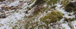 12月5日軽井沢。小雪。末候。橘始黄。