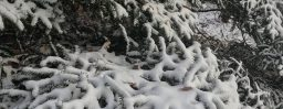 12月9日軽井沢。大雪。初候。閉塞成冬。