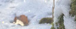 12月10日軽井沢。大雪。初候。閉塞成冬。
