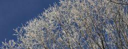 12月20日軽井沢。大雪。末候。鱖魚群。