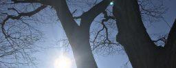 12月22日軽井沢。冬至。初候。乃東生。