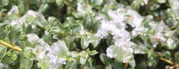 12月27日愛知。冬至。次候。麋角解。