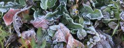 12月28日愛知。冬至。次候。麋角解。