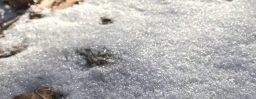 1月12日軽井沢。小寒。次候。水泉動。